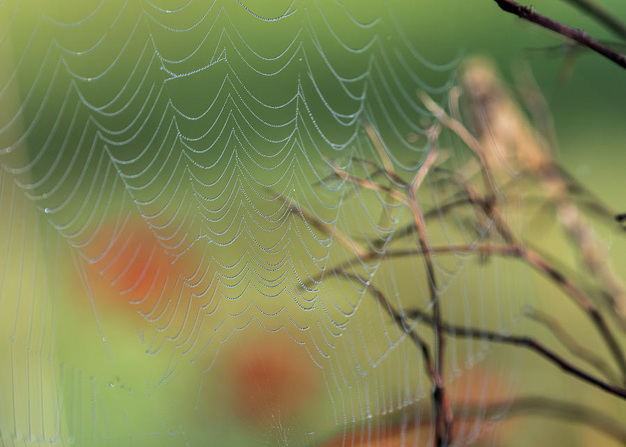 Spiderscape by Robert Potts