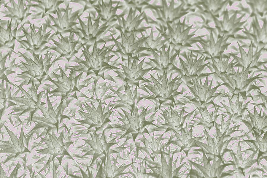 Spiky Succulent Pattern by Amy Sorvillo