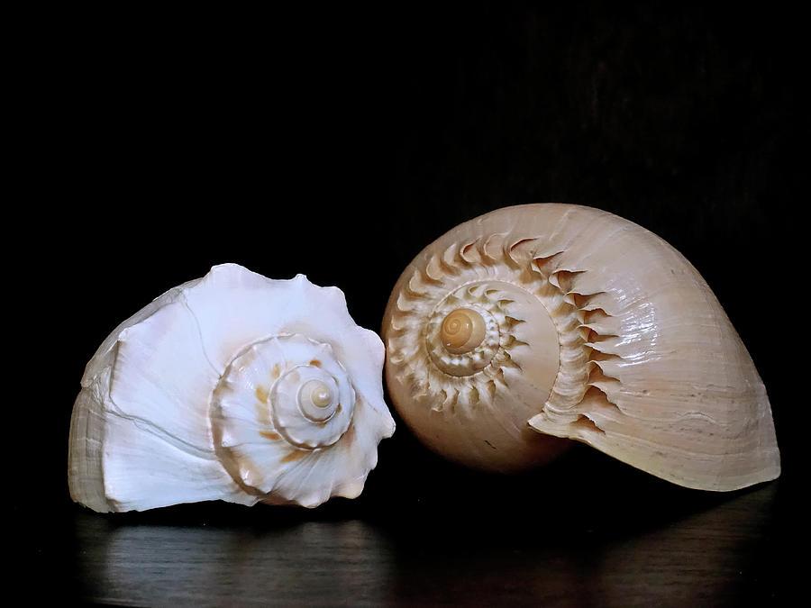 Spiraling Duo 3 by Lynda Lehmann
