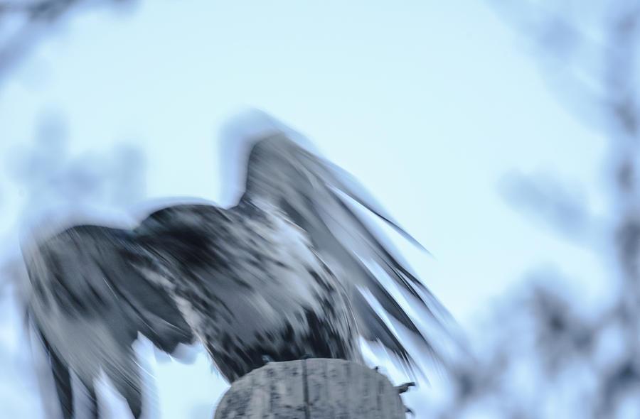 Spirit of hawk by Rae Ann  M Garrett