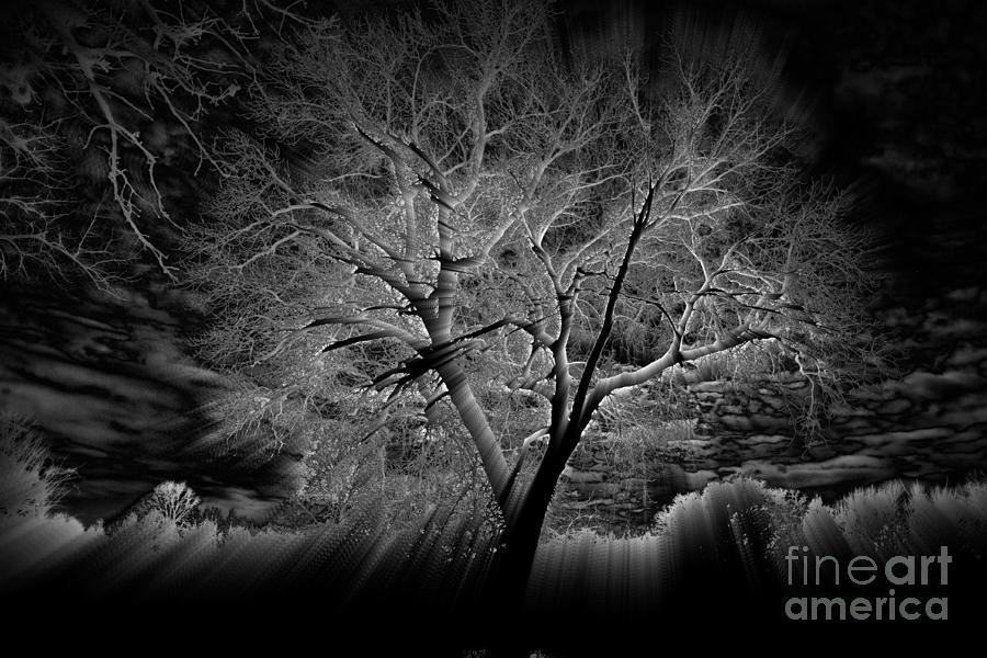 Spirit Tree by Kathy M Krause
