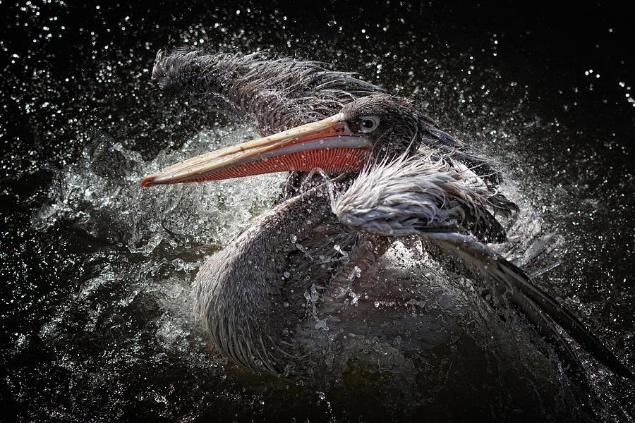 Action Photograph - Splash by Jose Beut
