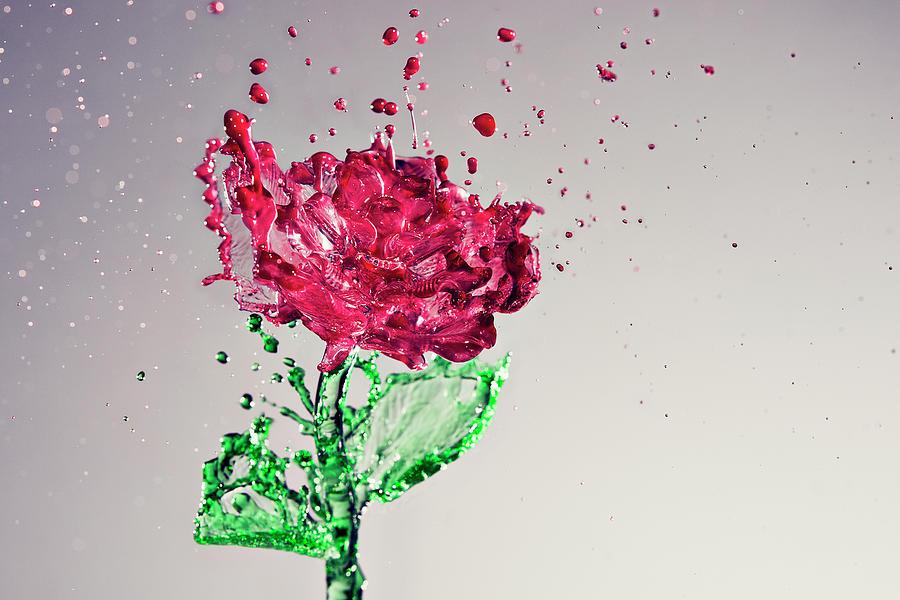 Splash Of Rose Photograph by Yugus