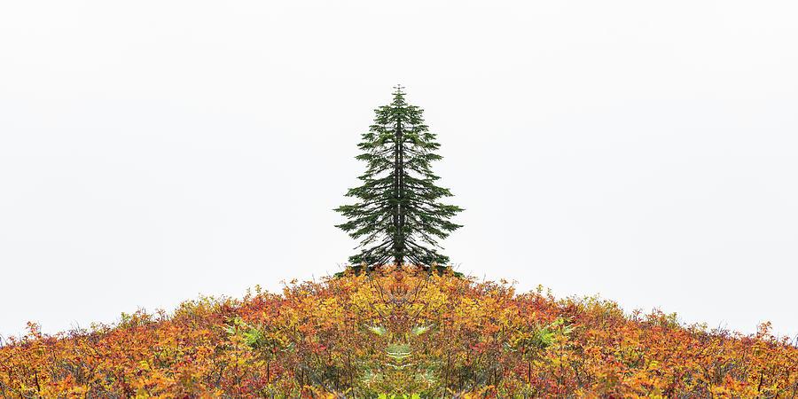 Design Photograph - Split Tree by Pelo Blanco Photo