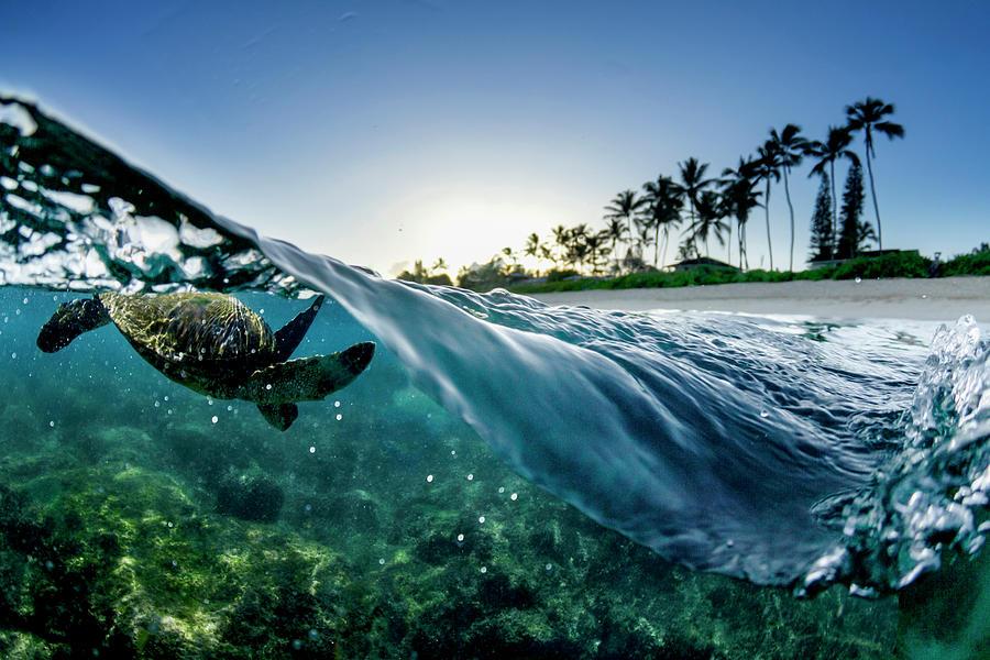 Split Wave Turtle by Sean Davey