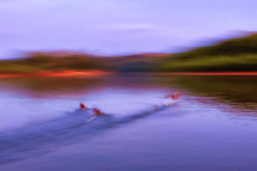 Spooked Ducks by Robert FERD Frank