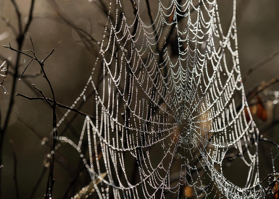 Spooky Spider Web by Robert Potts