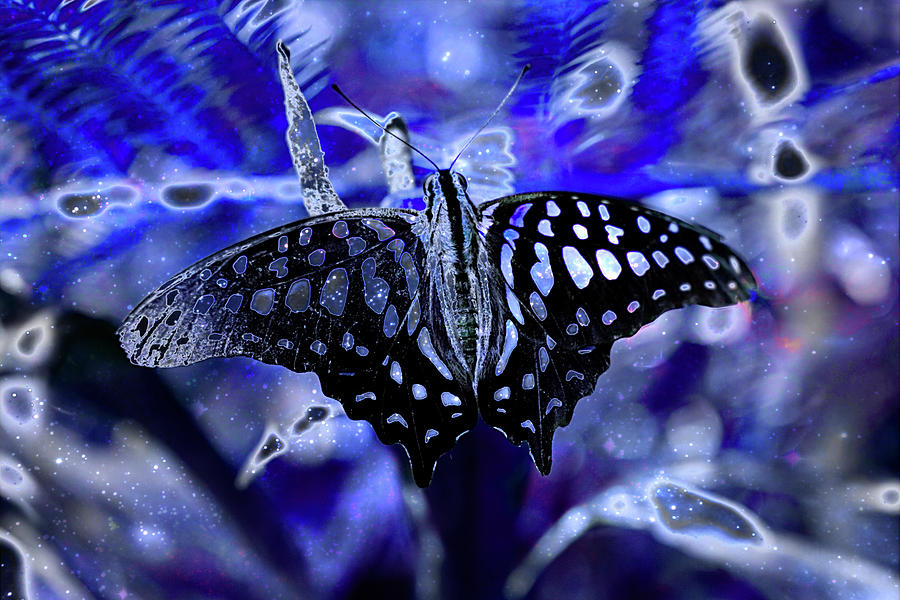 Butterfly Digital Art - Spoted Butterflie In Flux by Pat Pro