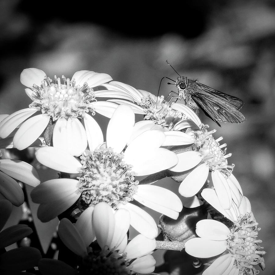 Spotlight to Pollinate by Robert Stanhope