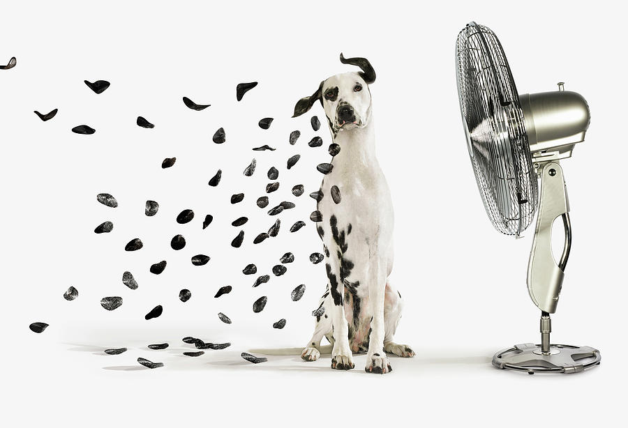 Pets Photograph - Spots Flying Off Dalmation Dog by Gandee Vasan