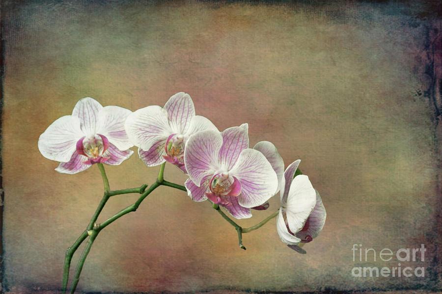 Spray of Orchids by Lynn Bolt