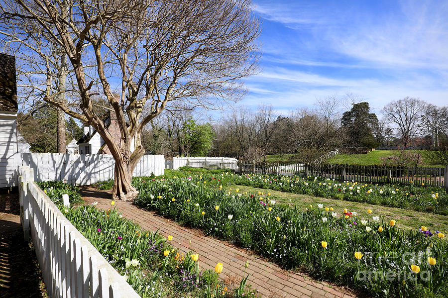 Spring Afternoon in Colonial Williamsburg by Rachel Morrison