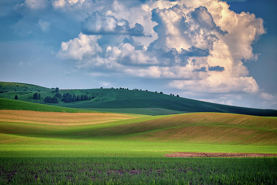 Spring Afternoon in the Palouse by Rick Berk