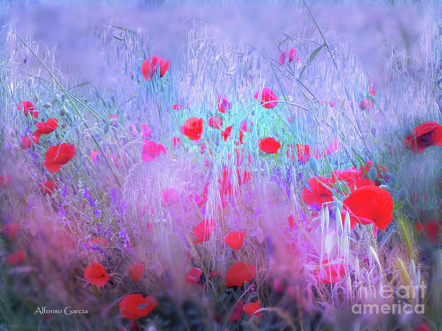 Spring by Alfonso Garcia