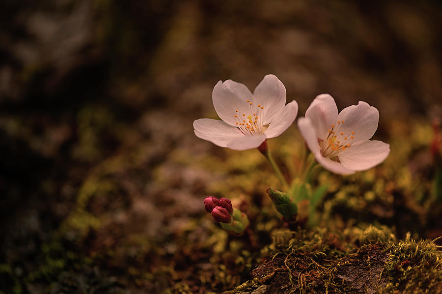 Spring Arrival in Seattle by Dan Mihai