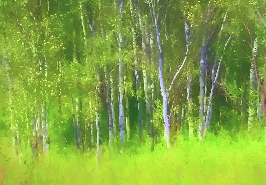 Spring Aspen by Kathy Bassett