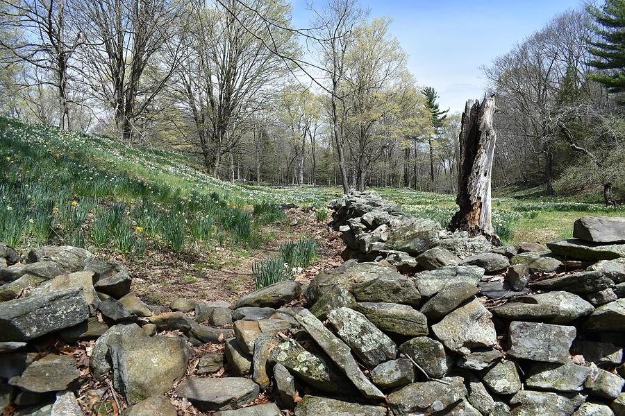 Spring at Laurel Ridge 1 by Nina Kindred