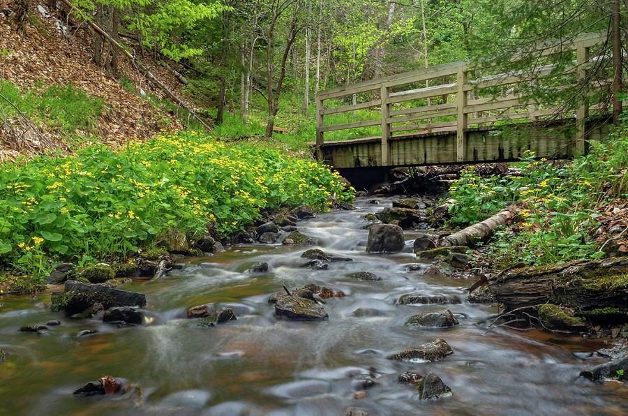 Spring at Munising Creek by Gary McCormick