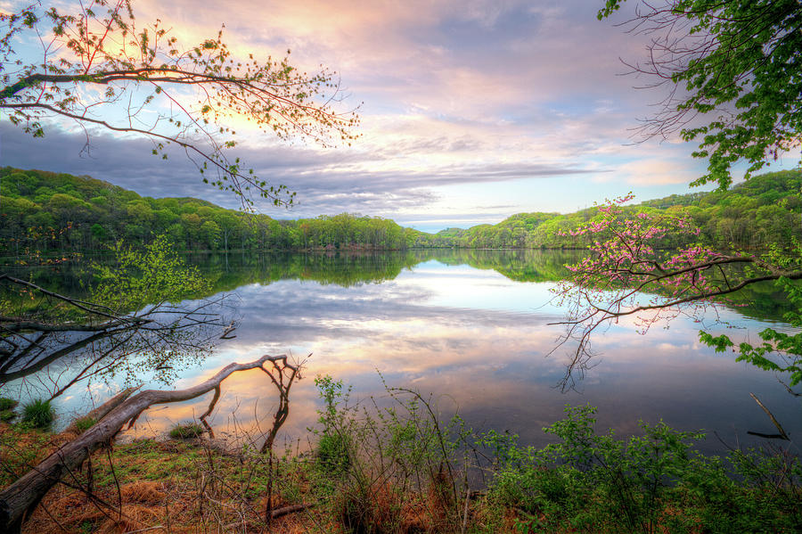 Spring At Radnor Lake Photograph by Malcolm Macgregor