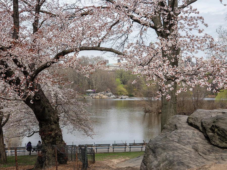 Spring at the Lake by Cornelis Verwaal