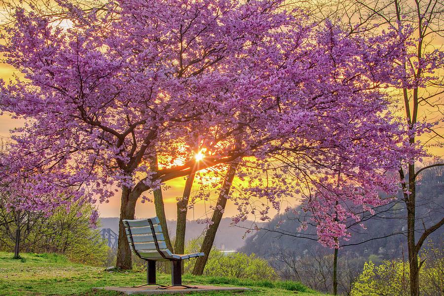 Spring Bench in Beaver 2 by Emmanuel Panagiotakis