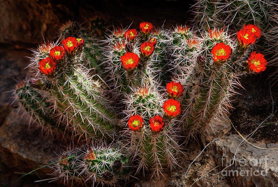 Spring Bloom by Scott Kemper