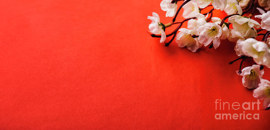 Spring blossom border over red background with copyspace. Chines by Jelena Jovanovic