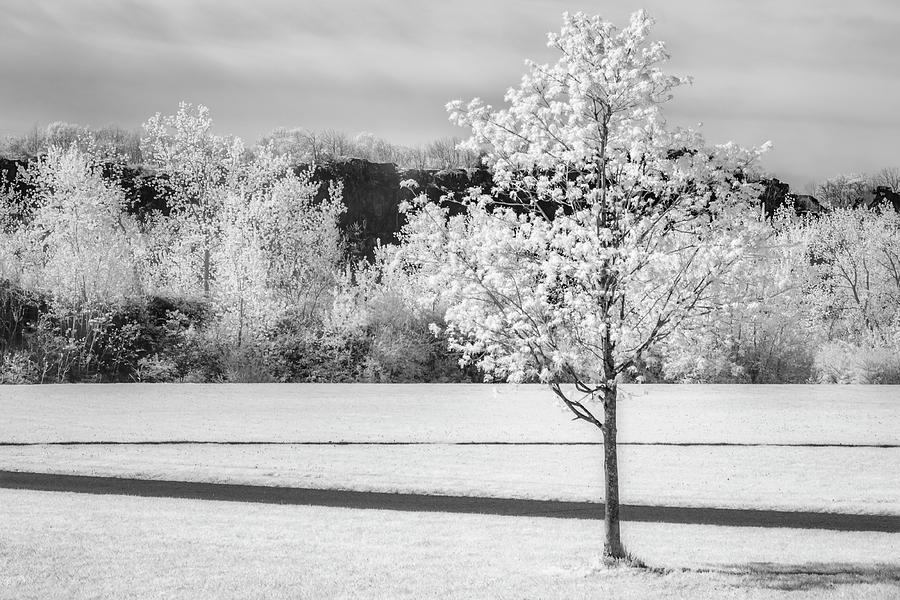 Spring Blossom BW by Susan Candelario