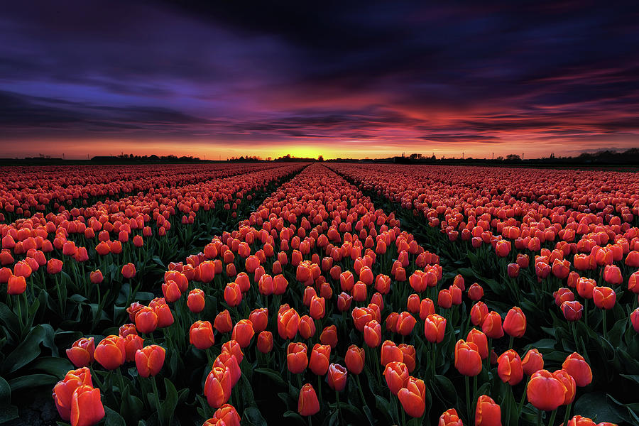 Spring blossoms by Jorge Maia