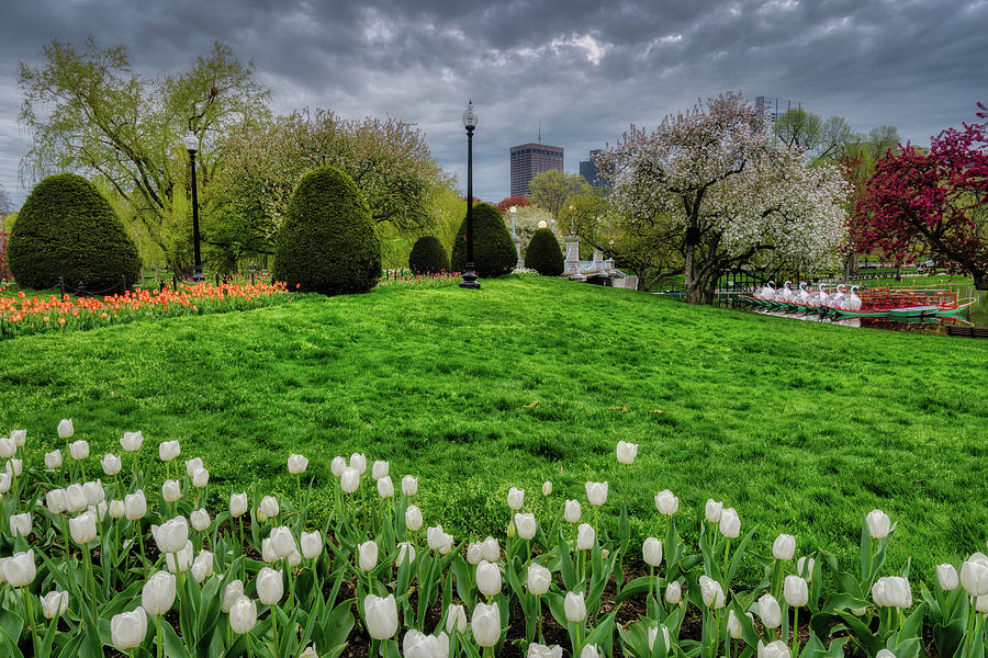 Spring, Boston Public Garden by Michael Hubley