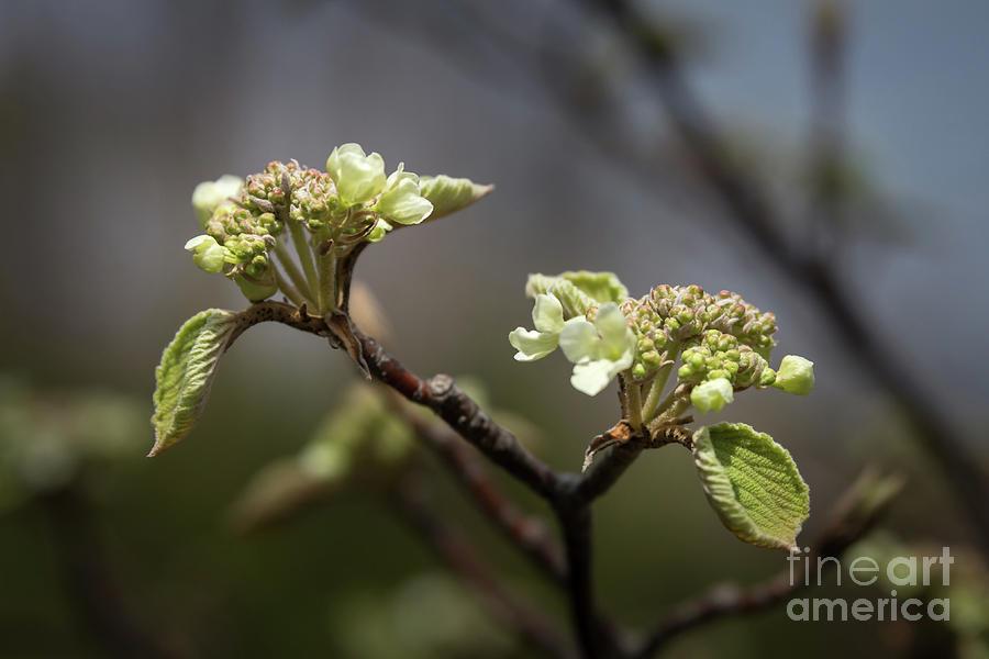 Spring Buds by Jola Martysz