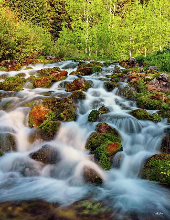 Cascade Photograph - Spring Cascade by Leland D Howard
