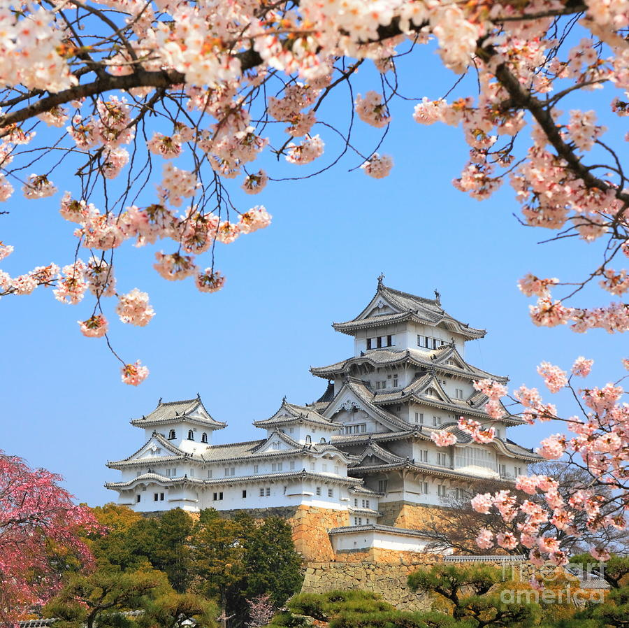 Castle Photograph - Spring Cherry Blossoms And The Main by S.r.lee Photo Traveller