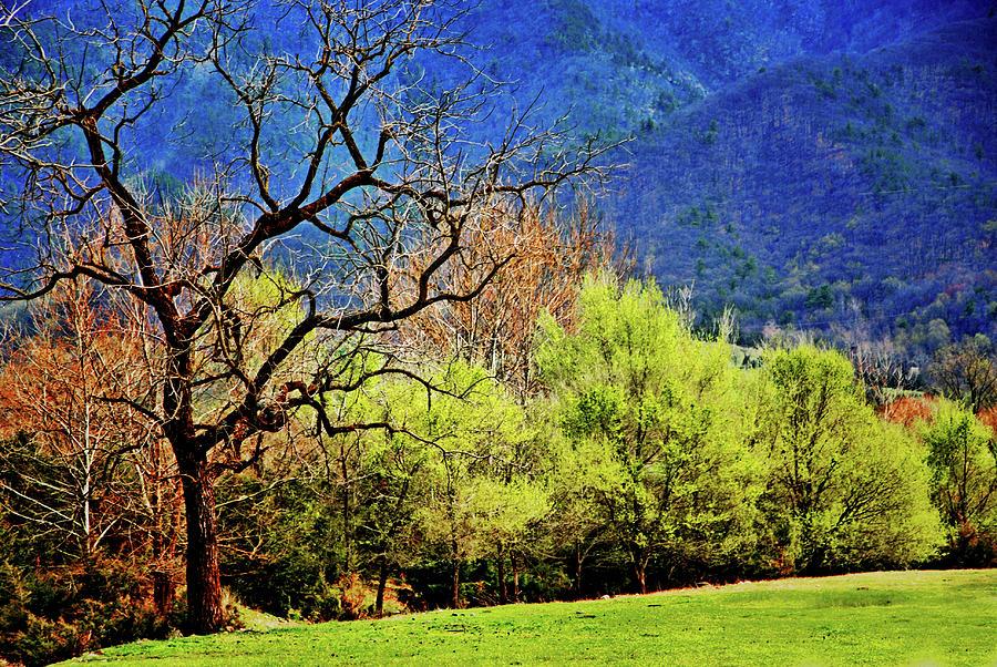 Spring colors, Shenandoah Valley by Bill Jonscher