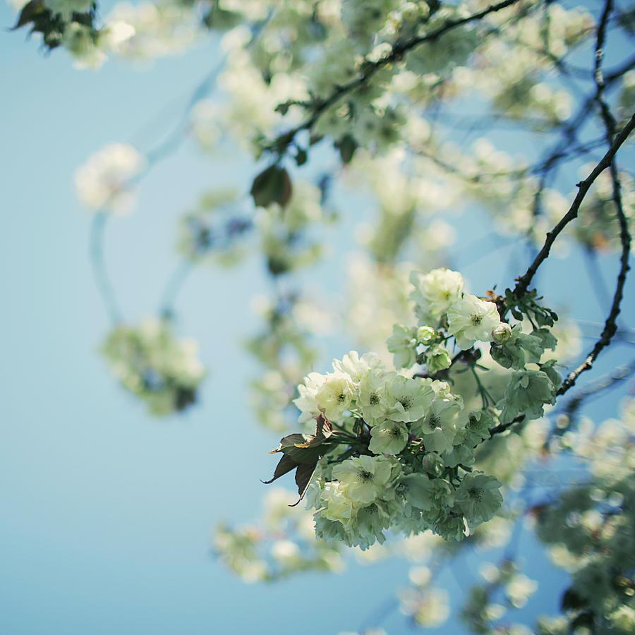 Spring Curves Photograph by Kevin Van Der Leek Photography