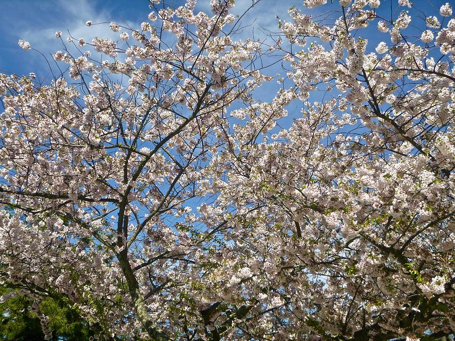 Spring Extravaganza 2 by Ellen Paull