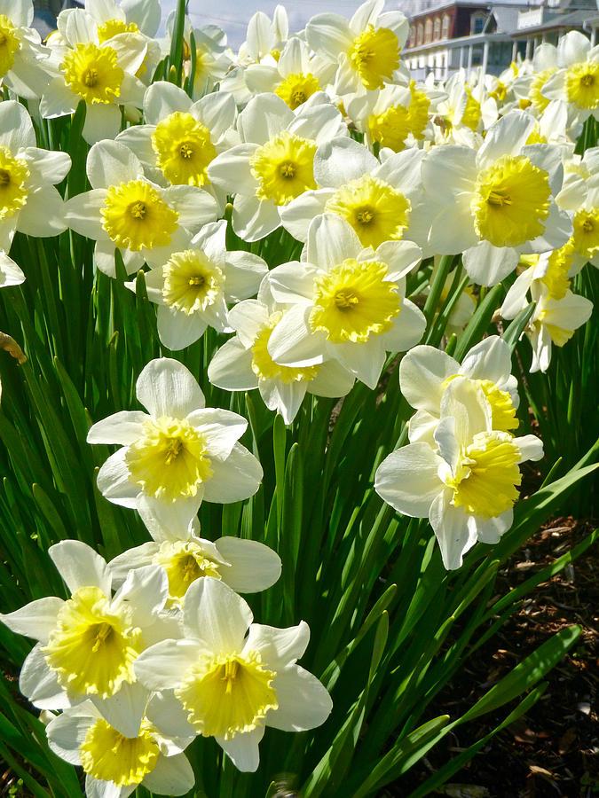 Spring Faces 2 by Ellen Paull