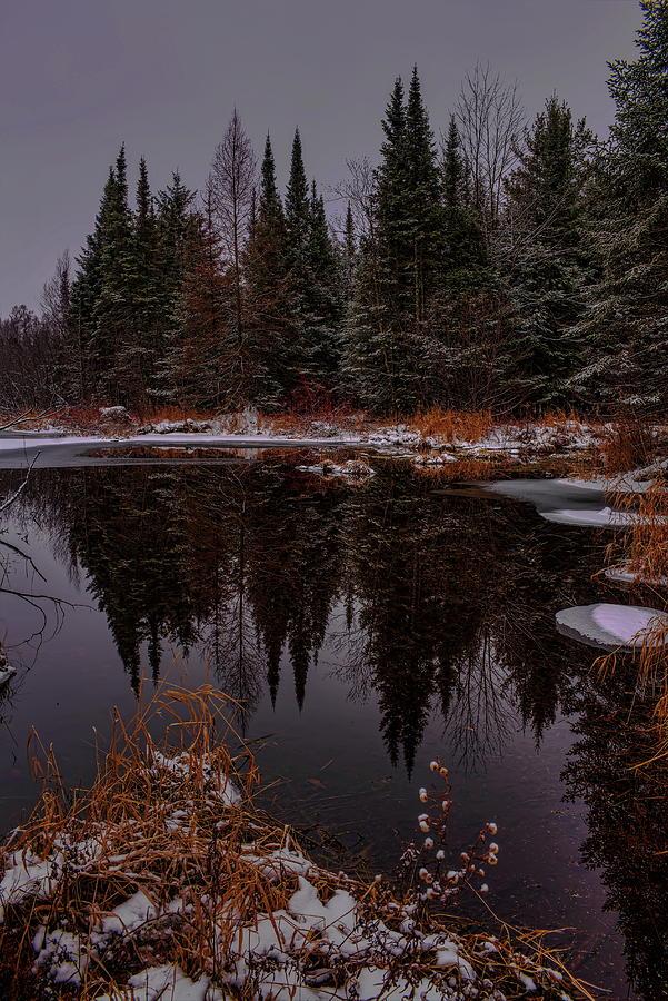 Spring Fed Pond Pines by Dale Kauzlaric