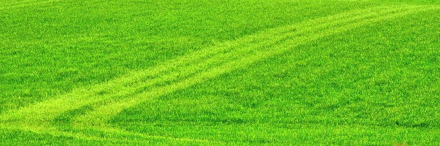 Spring Field Tracks by Jerry Sodorff