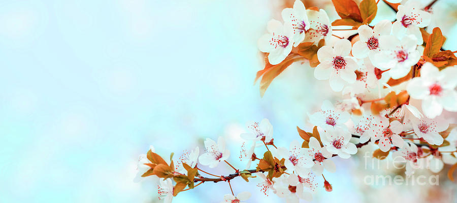 Spring flower blossom closeup with bokeh background. Springtime  by Jelena Jovanovic