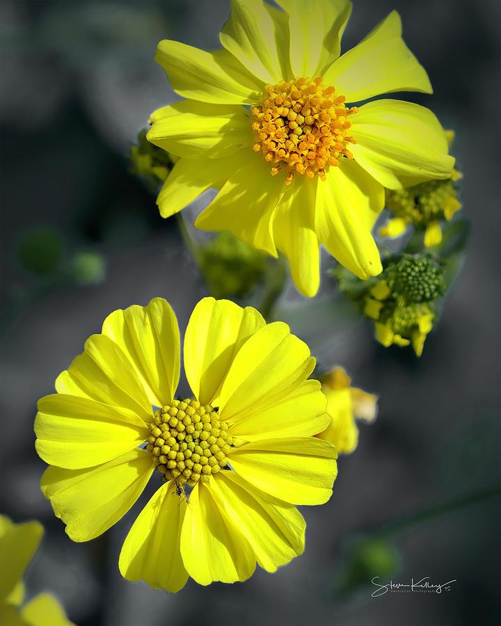 Spring Flower by Steve Kelley