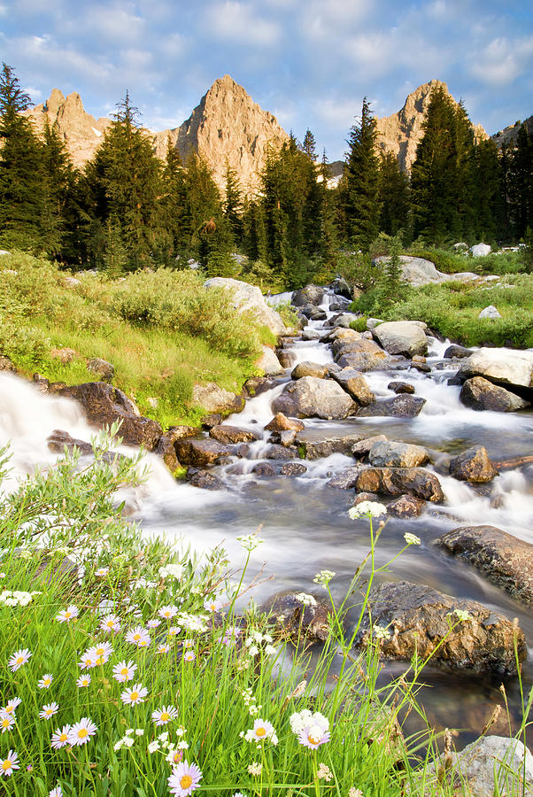 Spring Flowers And Flowing Water Below Photograph by Josh Miller Photography