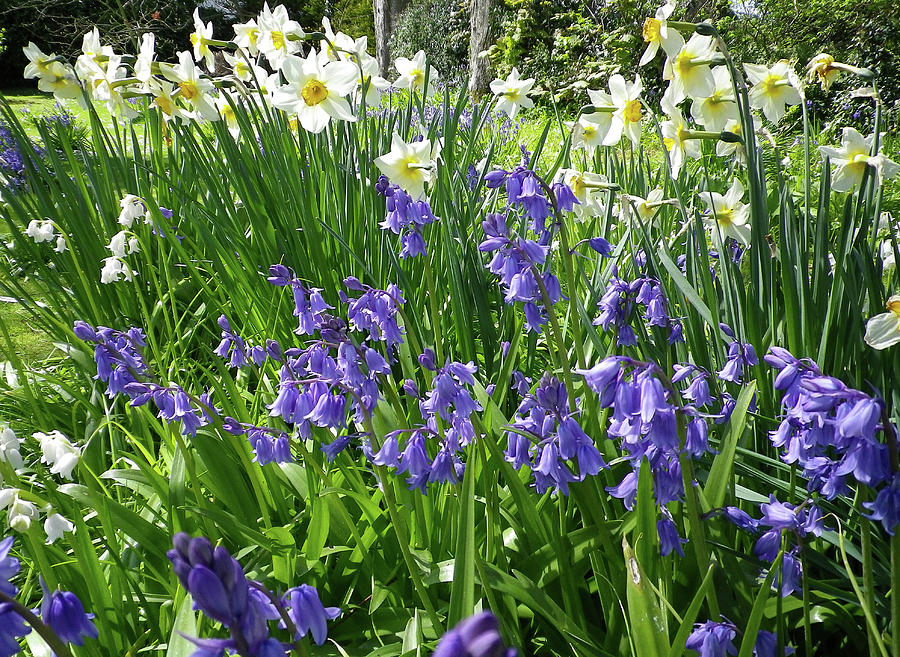 Spring Flowers In A Cottage Garden Cornwall Photograph