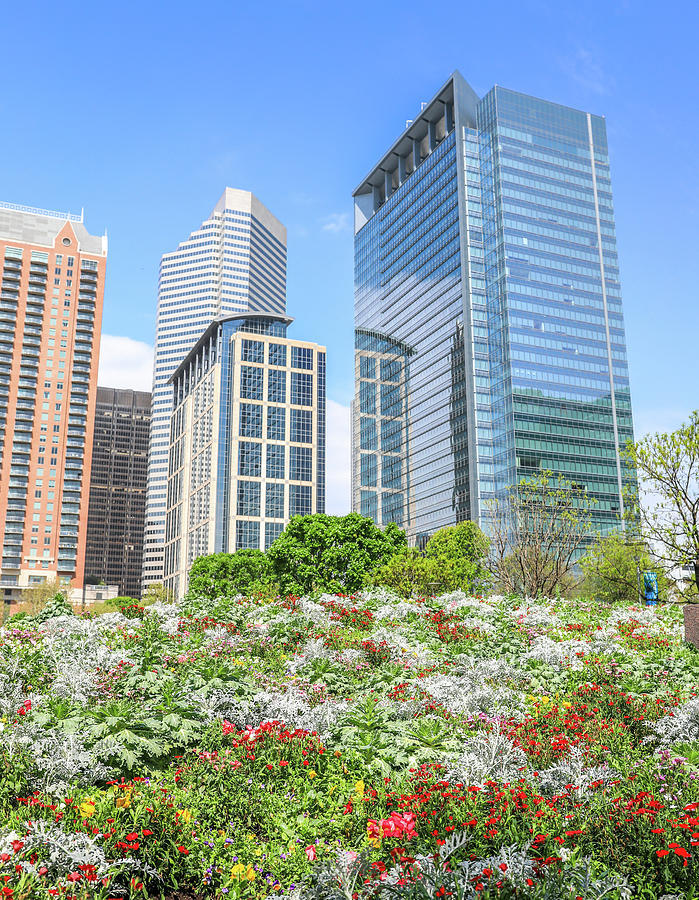 Spring Flowers In Houston by Dan Sproul