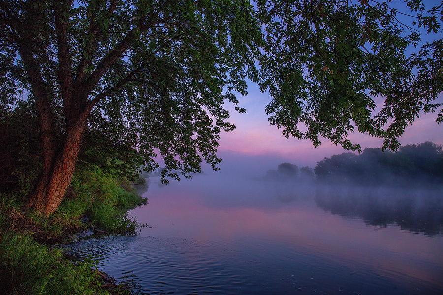 Spring fog with pink  by Lynn Hopwood