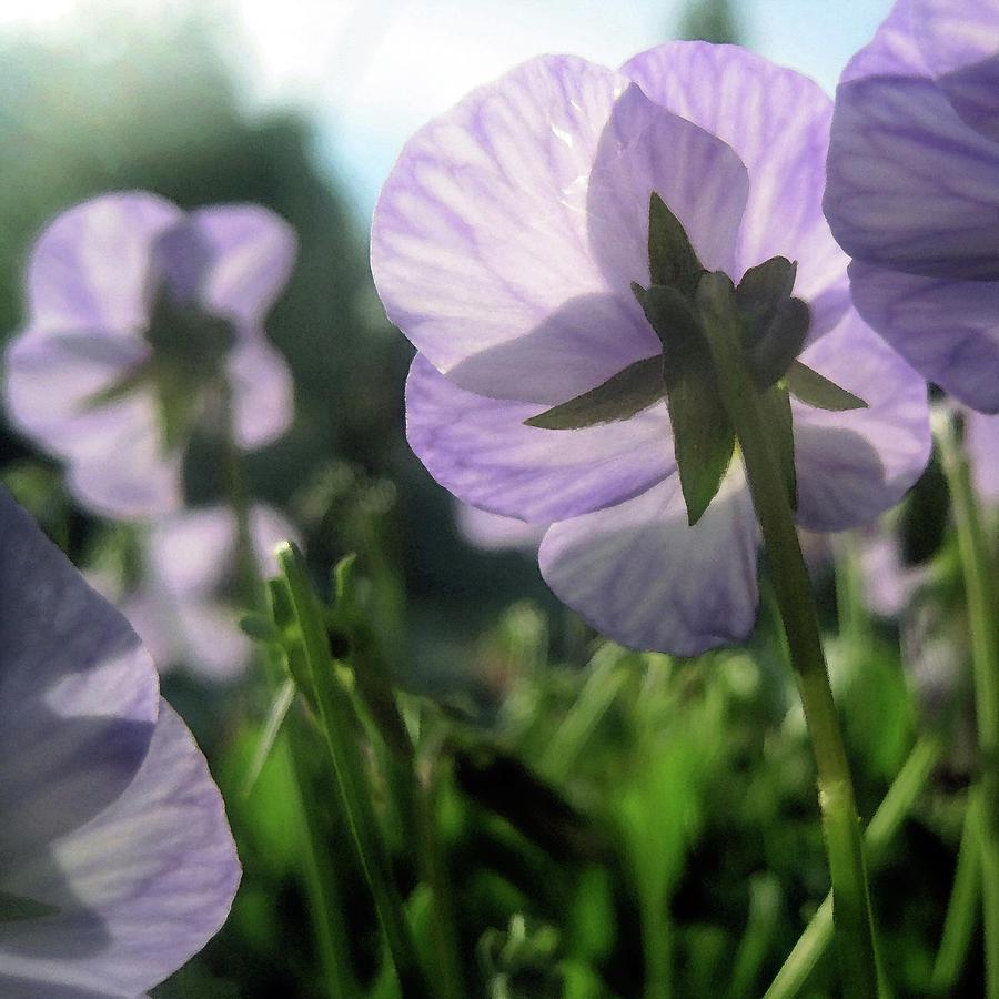 Spring Garden Flowers by Jaeda DeWalt