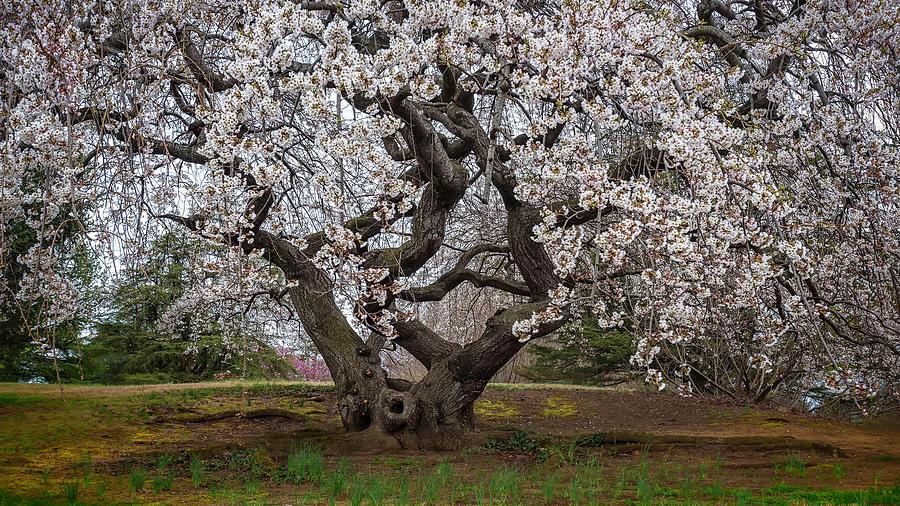 Spring In DC by Robert Fawcett