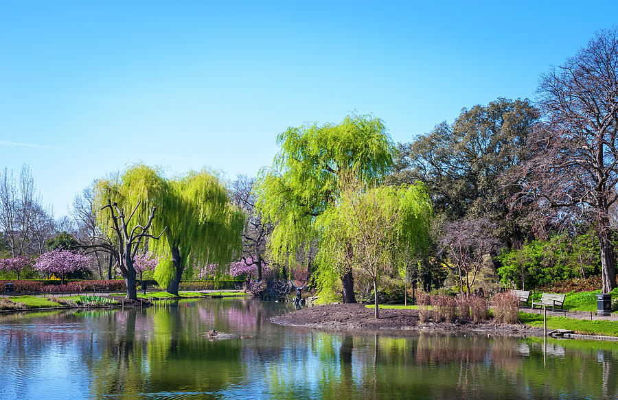 Spring In Regents Park, London Photograph by Cirano83