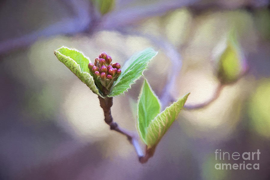 Spring In The Branches by Sharon McConnell