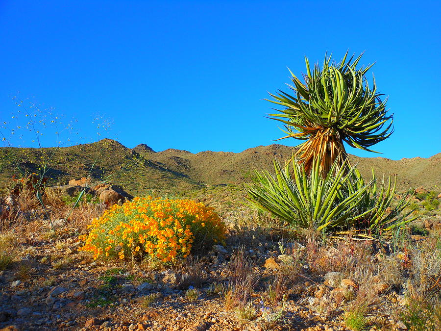 New Photograph - Spring In The Desert by James Welch
